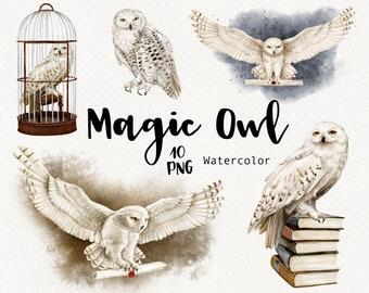 Watercolor Owl Clipart, Magic School, Wizard Clip Art, Hedwig owl, Halloween Clipart, bird clip art, Old Books, digital download graphic PNG