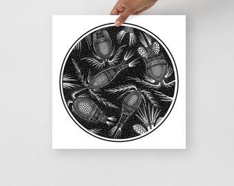 Cyclops Copepod: Poster