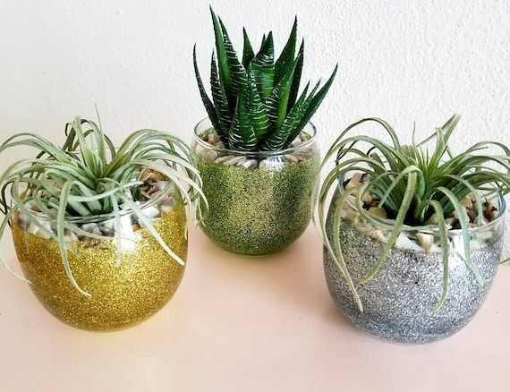 Three Glass Pots Adorned With Succulents Decorative Plants Etsy
