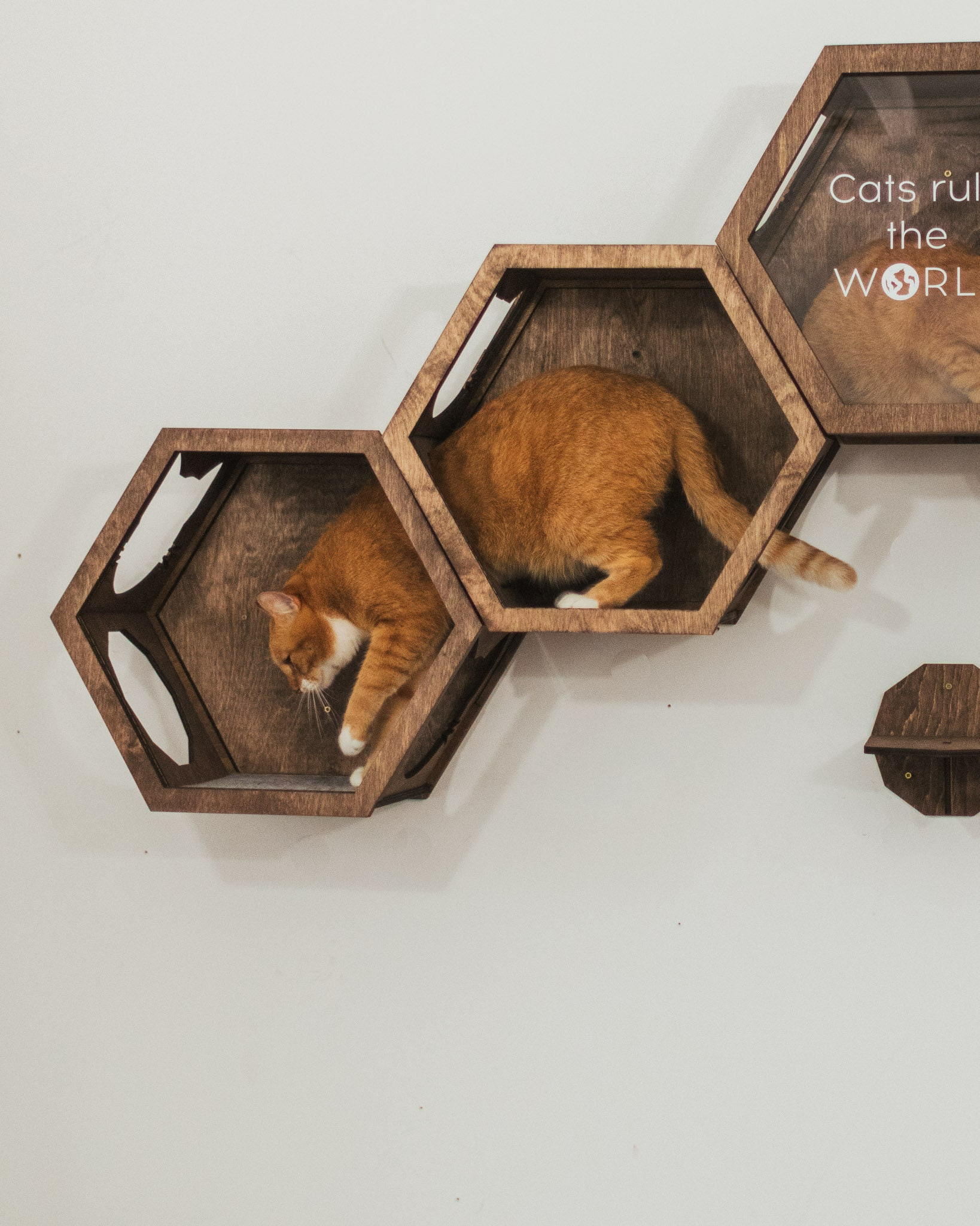 Cat Wall Furniture, Cat Hexagon Shelf, Cat Lover Gift, Cat Toys, Cat Shelves, Gift for Cat, Cat Furniture by Catsmode