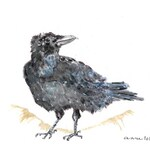 Sitting Crow, Watercolor Print on Paper