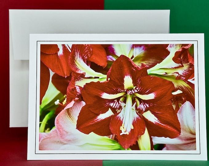 Christmas Holiday Card SAVE! - Buy MORE and SAVE - Red Christmas Amaryllis - Blank Card