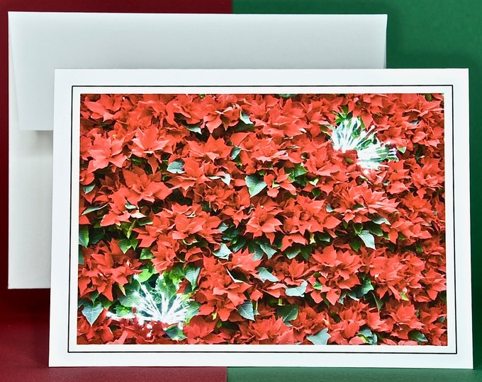Christmas Holiday Card SAVE! - Buy MORE and SAVE - Classic Red Poinsettia with Bursts