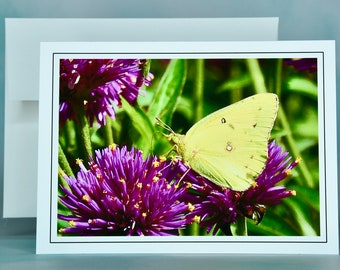 Butterfly Note Card - Clouded Yellow Sulphur - Blank Note Card