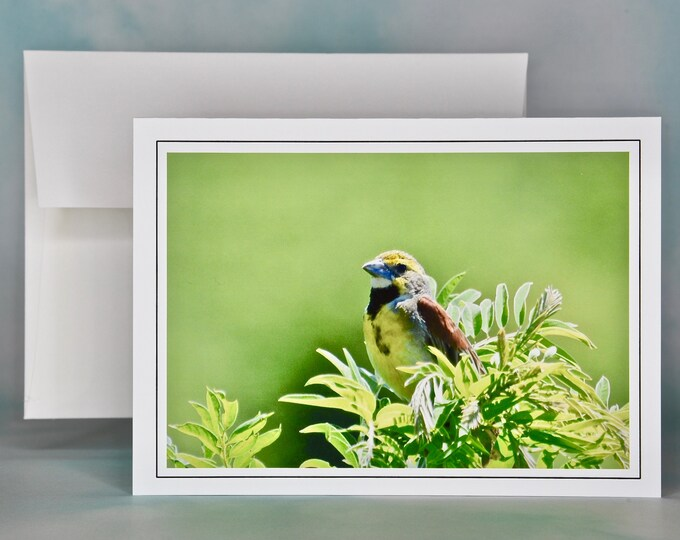 Bird Photo Note Card - Dickcissel Blank Note Card -  All Occasion Card