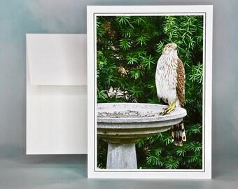 Bird Photo Note Card - Cooper's Hawk - Wild Birds - Blank Note Card
