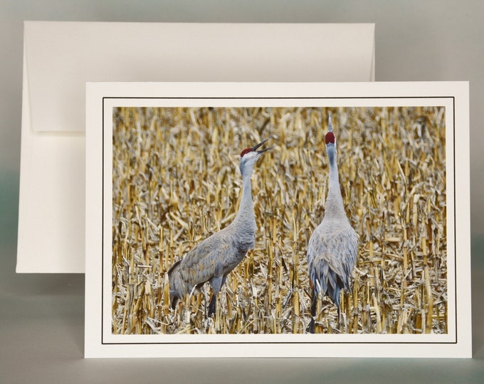 Sandhill Cranes Trumpeting Photo Note Card - Blank Note Card