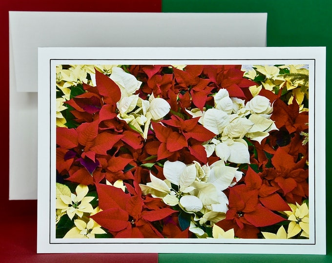 Christmas Holiday Card SAVE! - Buy MORE and SAVE - Colorful Poinsettia Mix