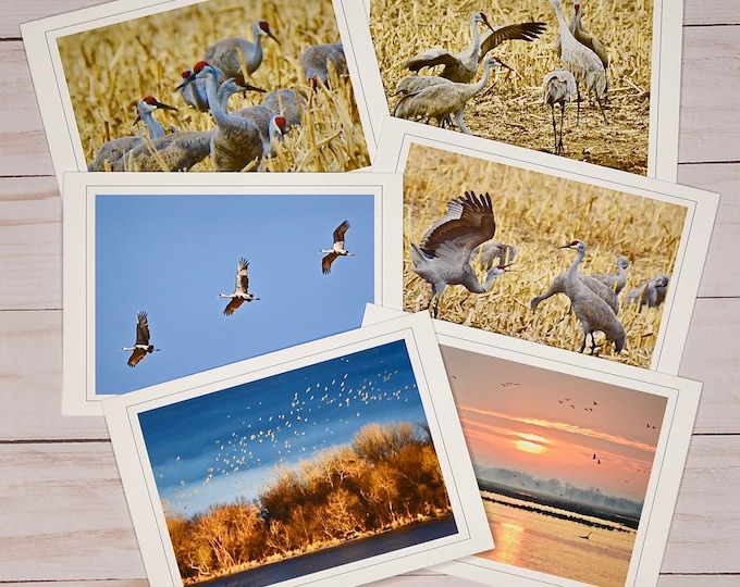 Sandhill Crane Photo Note Cards - Stationery - Blank All Occasion Cards