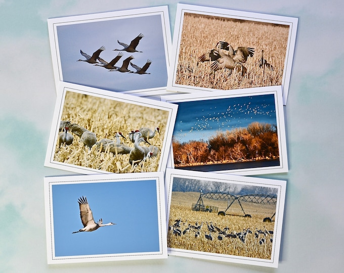 Sandhill Crane Blank Photo Note Card Assortment - Blank Note Cards with Envelopes