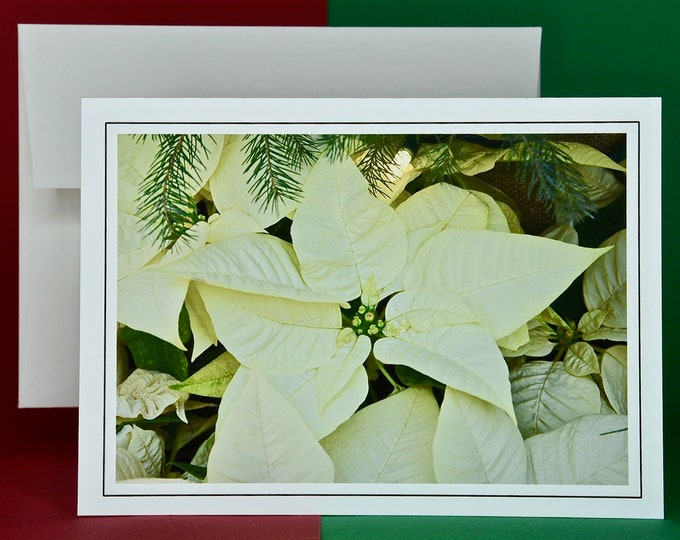 Christmas Holiday Card SAVE! - Buy MORE and SAVE - Elegant Ivory Poinsettia in Pine