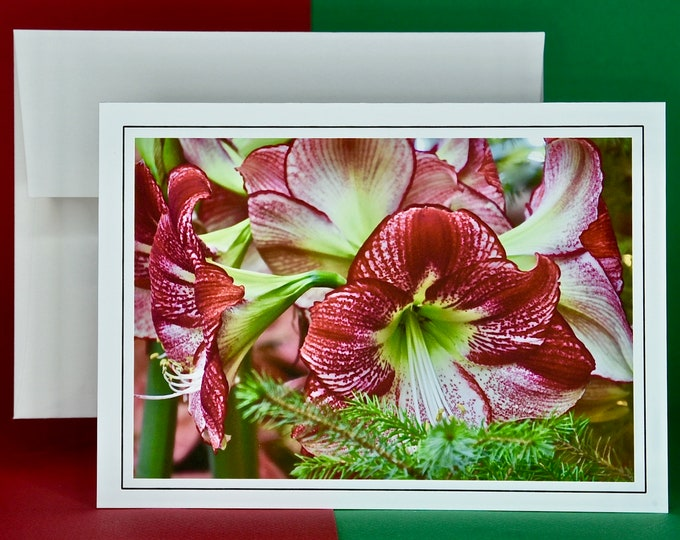 Christmas Holiday Card SAVE! - Buy MORE and SAVE - Variegated Red Christmas Amaryllis Greeting Card - Blank Inside