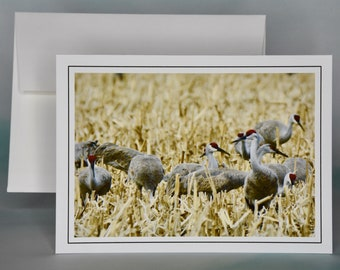 Sandhill Crane's View Photo Note Card - Blank Note Card - All Occasion Card