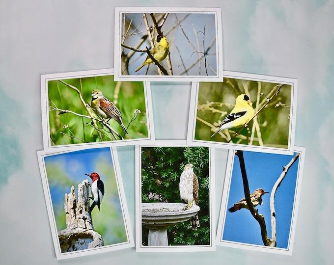 Bird Photo Note Cards - Backyard Bird Photo Note Cards - Blank Note Cards