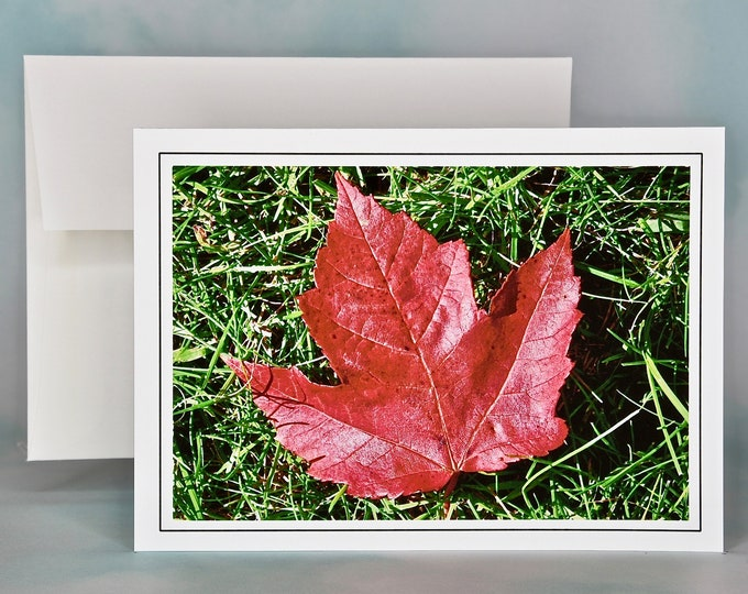 Autumn - Fall Photo Note Card - Blank Note Card - Red Maple Leaf