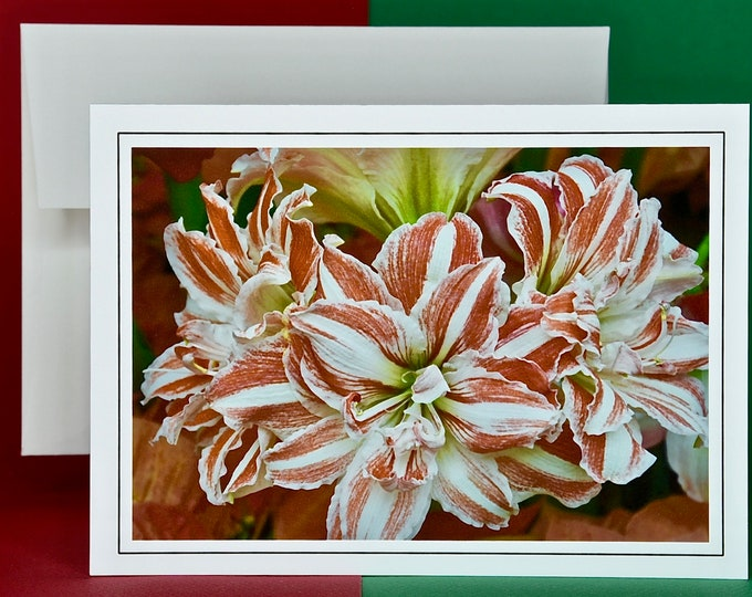 Christmas Holiday Card SAVE! - Buy MORE and SAVE - Variegated Belladonna Christmas Lily - Blank Card