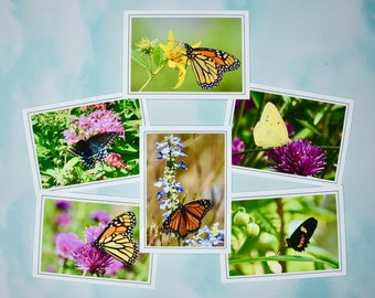 Butterfly Note Cards - Blank Note Cards