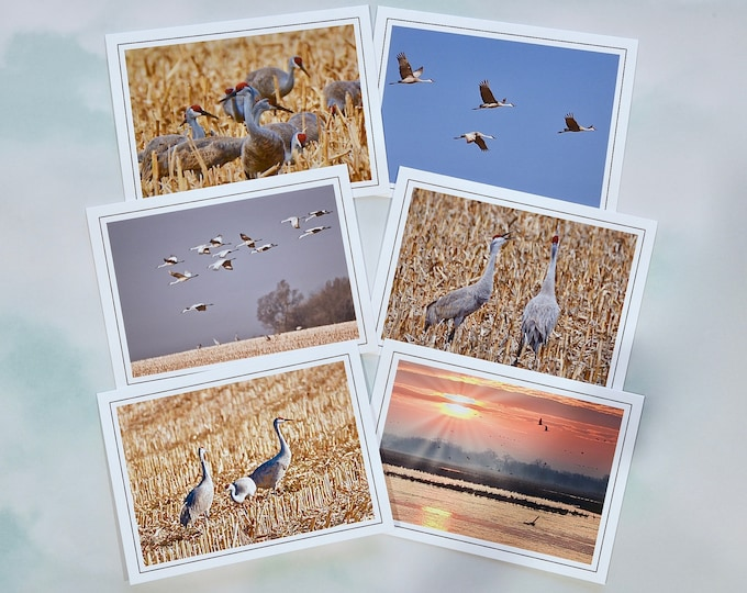 Sandhill Crane Blank Photo Note Cards - Blank Note Cards - All Occasion Cards