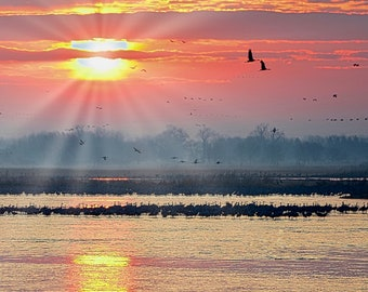 Sandhill Cranes at Sunrise - Cranes on the Platte