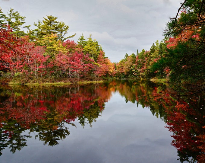 Fall Foliage Print of brilliant Fall Color reflecting on a local pond