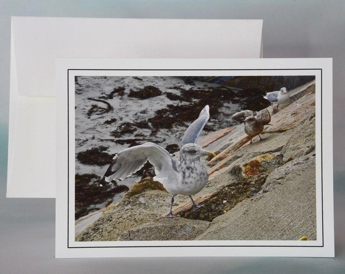 Coastal Photo Note Card - Blank Note Card - Busy Gulls - Nautical Scene
