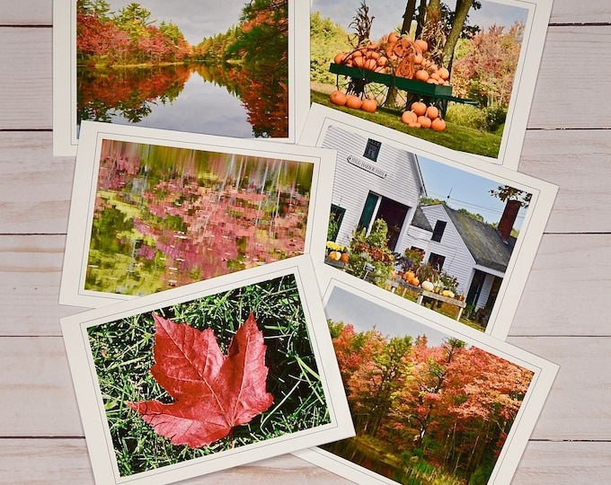 Note Cards - Fall Foliage