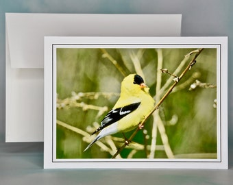 Bird Photo Note Card - American Goldfinch Blank Note Card - All Occasion Card