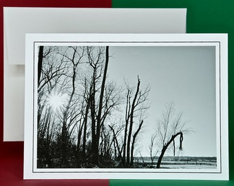Winter Scenery - Set of 8 with Envelopes - Winter Sun Through the Iced Trees - Blank Note Card