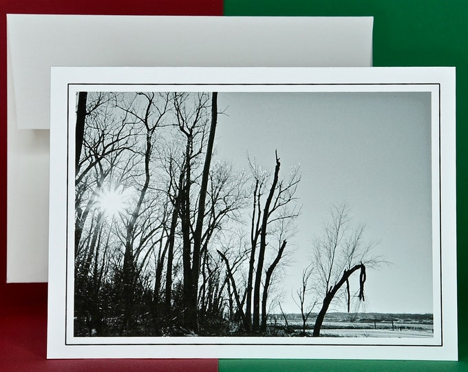 Christmas Holiday Card SAVE! - Buy MORE and SAVE - Winter Sun Through the Iced Trees - Winter Scene