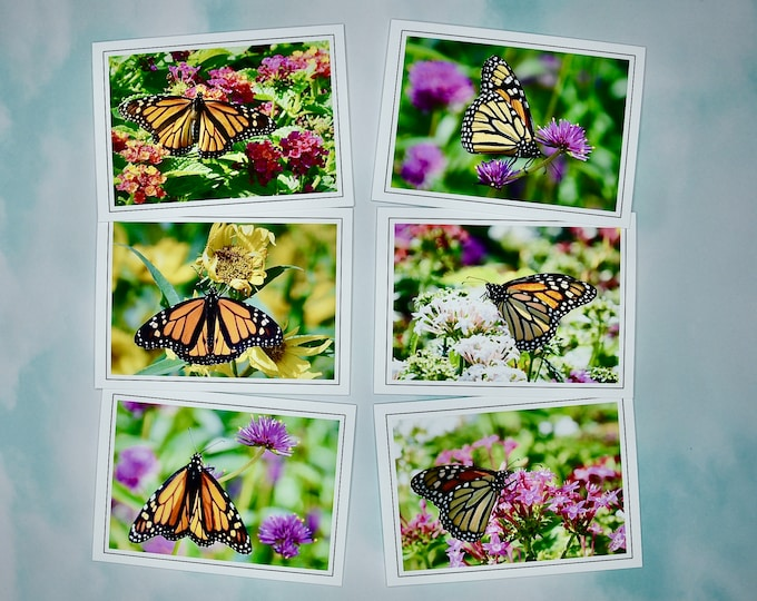 Butterfly Note Cards - Monarch Butterflies - Blank Note Cards