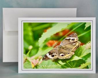 Buckeye Butterfly Photo Note Card - Blank Note Card