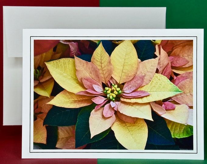 Christmas Holiday Card SAVE! - Buy MORE and SAVE - Euphorbia Autumn Leaves Poinsettia