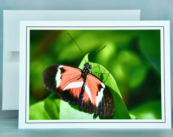 "Butterfly Note Card - ""Papillon Rouge, Noir et Blanc"" - Blank Note Card"