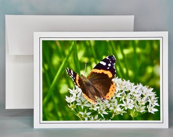 Butterfly Photo Note Card - Red Admiral Butterfly Note Card - Blank Note Card