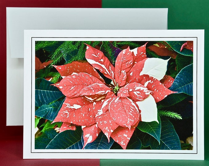 Christmas Holiday Card SAVE! - Buy MORE and SAVE - Ice Punch Poinsettia