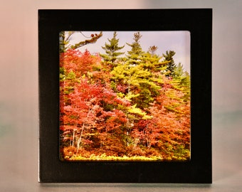 Small Framed Fall Art - Fall/Autumn - Wall or Tabletop