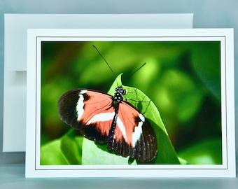 "Butterfly Note Card - ""Papillon Rouge, Noir et Blanc"" - Blank Note Card"