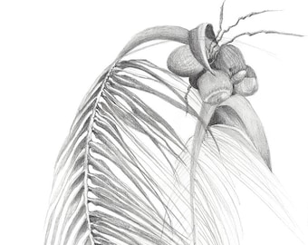 Caribbean palm frond
