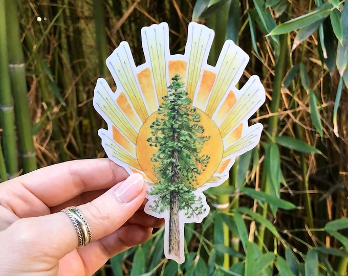 Ponderosa Pine Tree and Sunburst Sticker | nature inspired clear vinyl decal for cars, phone cases, computers, and water bottles