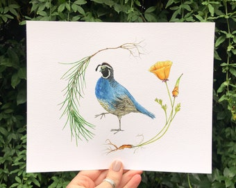 California Quail, Poppy Flower, and Ponderosa Pine Tree Art Print | California state bird watercolor boho botanical earthy wall art