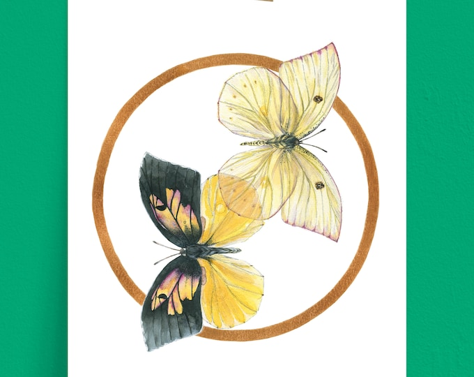 California Dogface Butterfly Art Print