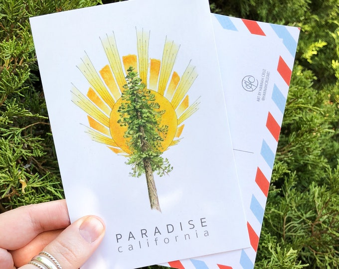 Postcard Set: Ponderosa Pine Tree and Sunburst, inspired by Paradise, California