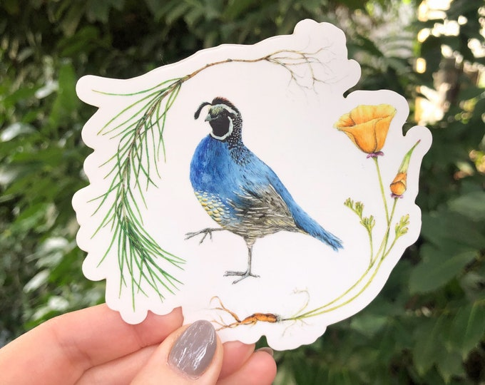 California Quail, Poppy Flower, and Pine Tree Sticker | nature inspired clear vinyl decal for cars, phone cases, computers, & water bottles