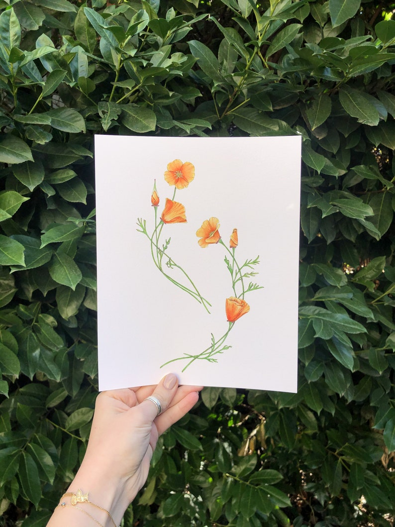 California Poppy Flower Art Print  botanical orange image 0