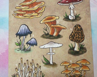 Mushrooms of All Kinds - Art Print