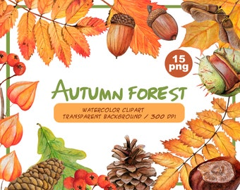 Watercolor autumn forest clipart-fall warm forest clip art-Autumn woodland-handpainted fall leaves PNG-acorns nuts berries-Instant Download