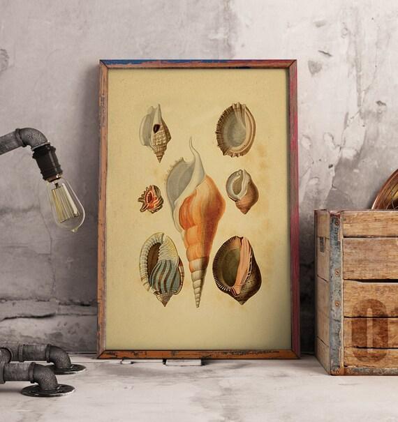 Seashell Art Seashells Prints Antique Seashell Etsy