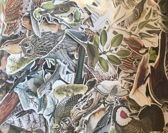 25 fussy cut out birds ephemera for scrapbooking