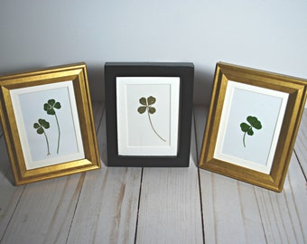 Real Four Leaf Clover In Frame | Framed lucky 4-leaf clover with mat | Graduation Good Luck Gift