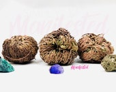 Rose of Jericho - Resurrection Plant New Beginnings Prosperity Success Blessings Wishes Love Protection Rituals